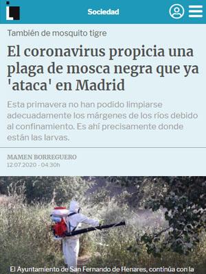 El coronavirus propicia una plaga de mosca negra que ya 'ataca' en Madrid
