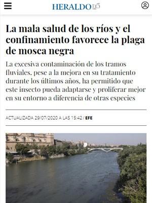 La mala salud de los ríos y el confinamiento favorece la plaga de mosca negra